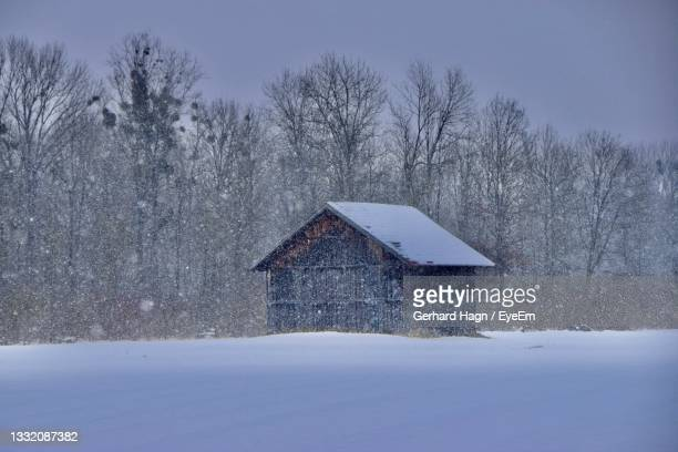 bare trees on snow covered field on a snowing wintersday - gerhard hagn stock-fotos und bilder