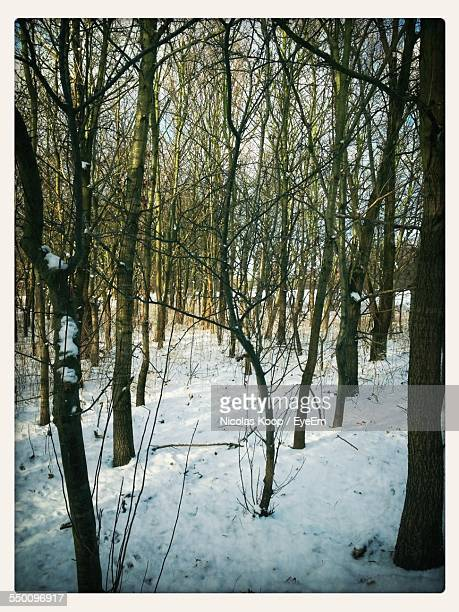 bare trees on snow covered forest - transferbild stock-fotos und bilder