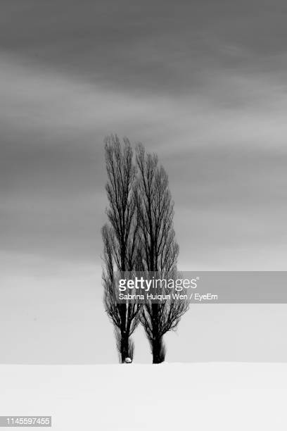 bare trees on snow covered land against sky - bare tree stock pictures, royalty-free photos & images