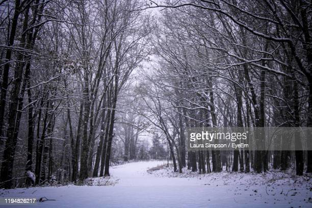 bare trees on snow covered land during winter - laura cover stock pictures, royalty-free photos & images