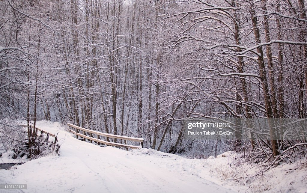 Bare Trees On Snow Covered Land : Stockfoto