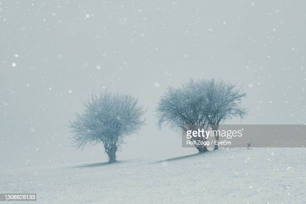 bare trees on snow covered land - sankt poelten stock pictures, royalty-free photos & images