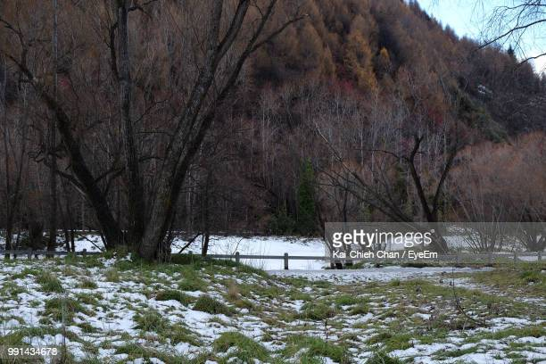 bare trees on snow covered land - arrowtown stock pictures, royalty-free photos & images