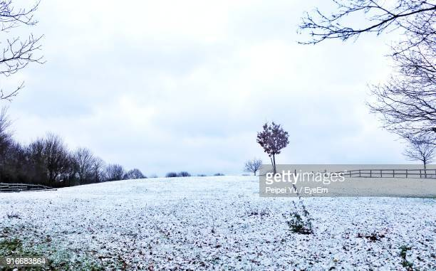 bare trees on snow covered landscape against sky - winter wonderland stock photos and pictures