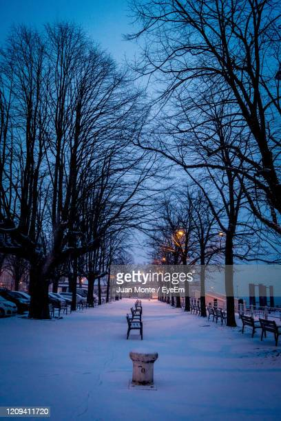 bare trees on snow covered landscape - belgium stock pictures, royalty-free photos & images