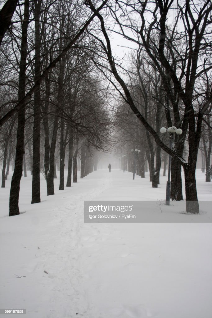 Bare Trees On Snow Covered Landscape : Stock Photo