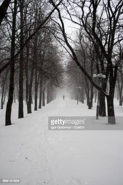 bare trees on snow covered landscape - igor golovniov stock pictures, royalty-free photos & images