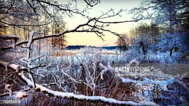 bare trees on snow covered landscape - turku finland stock photos and pictures