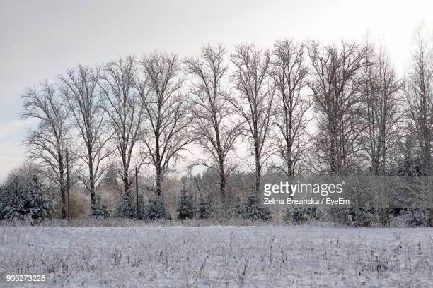 bare trees on snow covered landscape - brezinska stock pictures, royalty-free photos & images