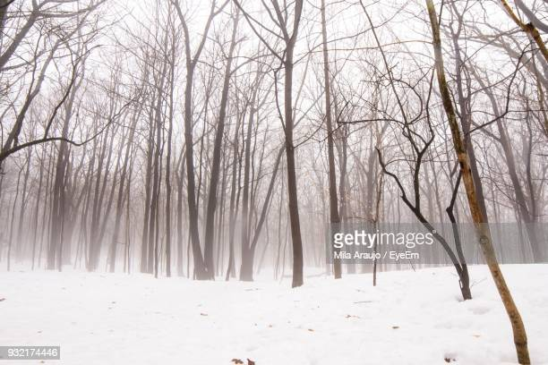 Bare Trees On Snow Covered Landscape