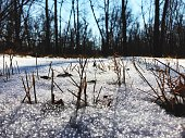 bare trees snow covered landscape