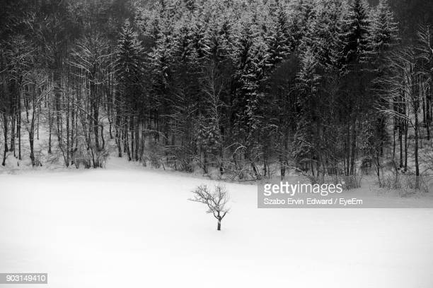 Bare Trees On Snowfield During Winter