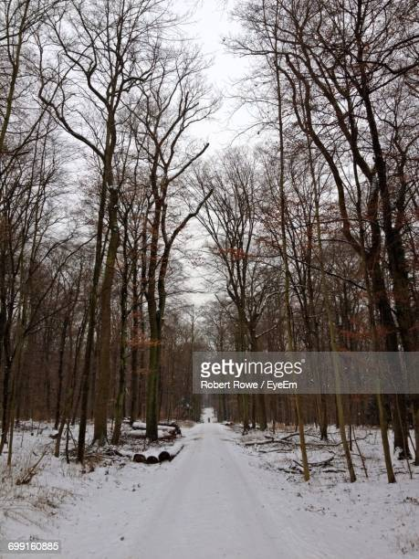 Bare Trees On Snowfield In Forest