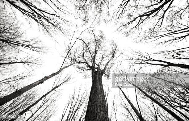 bare trees - ominous stock pictures, royalty-free photos & images