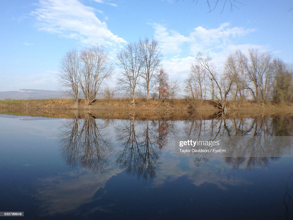 Bare Trees Reflecting In Water : Foto stock