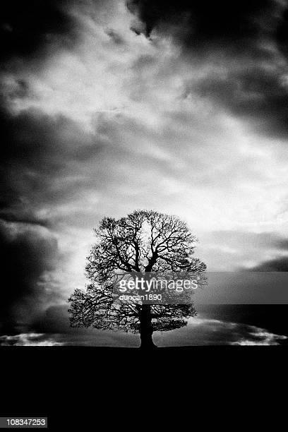 Nu arbre d'hiver