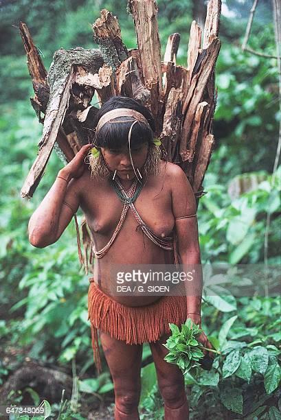 Barechest Yanomami woman with a wooden basket on her back The Amazon rainforest Venezuela