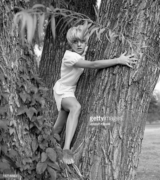 Barefoot and wideeyed American dancer and dance instructor and future actress Goldie Hawn hugs a tree Washington DC September 8 1966