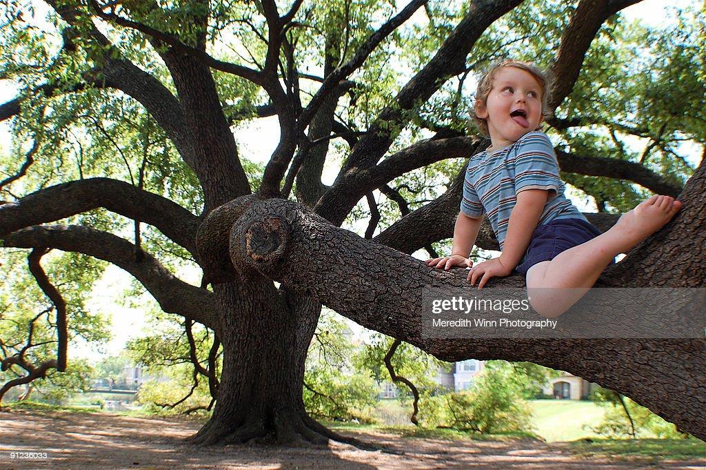 Barefoot boy climbing huge oak tree : Stock Photo