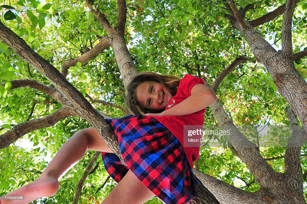 barefoot girl in tree : Stock Photo