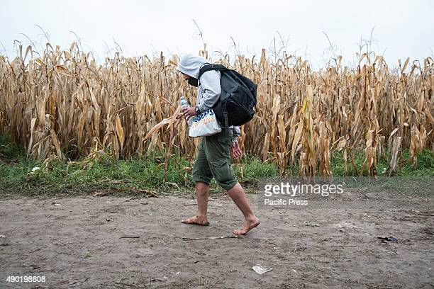 BORDER BAPSKA SYRMIA CROATIA A barefoot refugee walks on the path leading to the SerbianCroatian border More refugees continue to arrive in Europe...