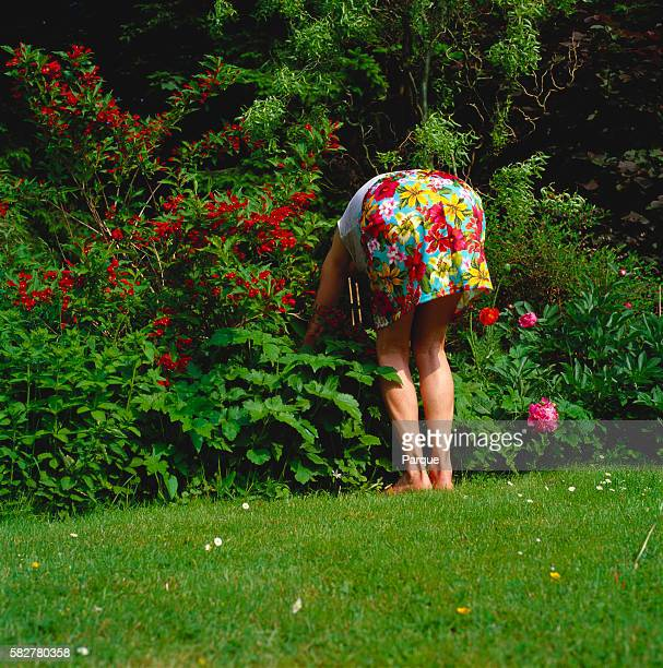 barefoot woman bending down in lush garden - bending over stock pictures, royalty-free photos & images