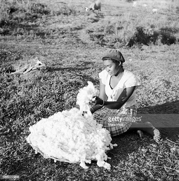 A barefoot woman sorts through a pile of harvested cotton bolls
