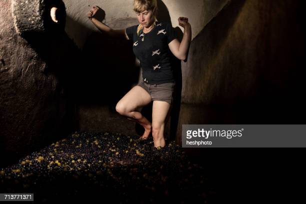 barefoot woman stamping on grapes in vineyard vat - heshphoto stock pictures, royalty-free photos & images