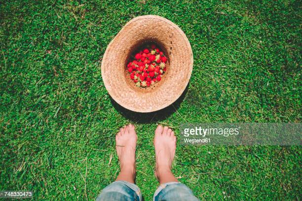barefoot woman standing next to straw hat full of strawberries on the lawn - old lady feet stock pictures, royalty-free photos & images