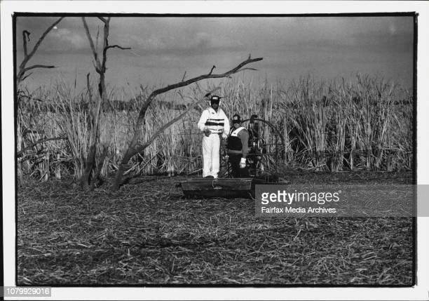 Baren box swamp alligator weed infestationRobert Marcus Department of water resources weed control officer sprays round up on the noxious alligator...