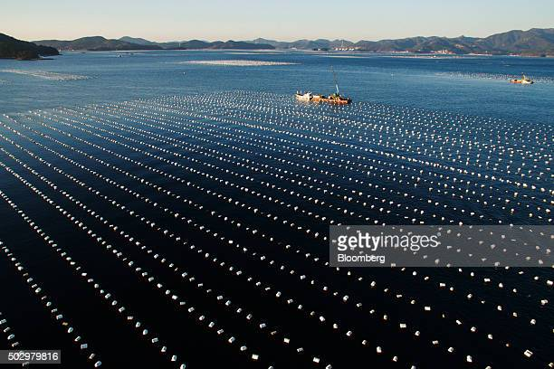 Barges and ships are moored for oyster harvest as buoys float on sea in this aerial photograph taken above Tongyeong South Korea on Monday Dec 28...