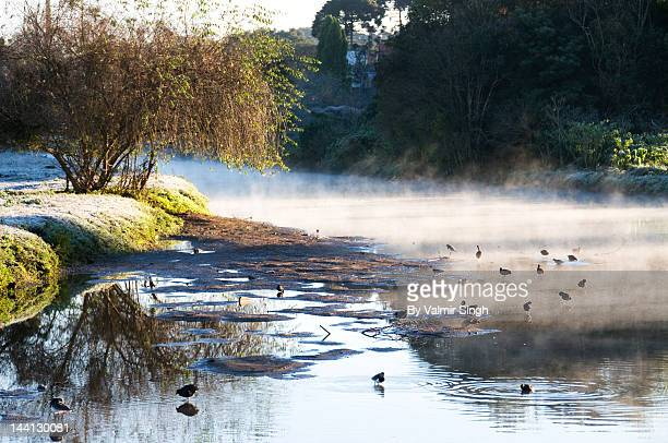 barigui park in winter - curitiba stock pictures, royalty-free photos & images