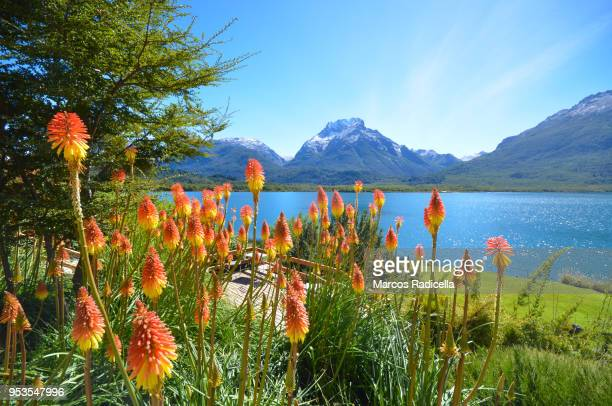 bariloche, patagonia argentina - bariloche stock pictures, royalty-free photos & images