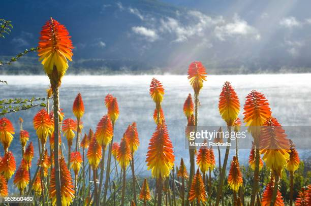 bariloche, patagonia argentina - radicella stock pictures, royalty-free photos & images