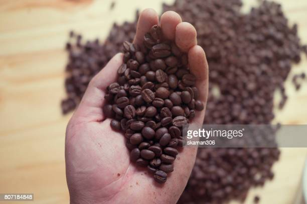barista hand holding roasted african coffee seed with espresso cup