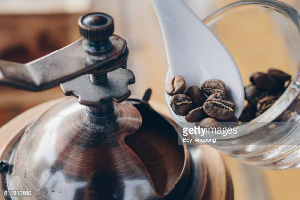 Barista prepare the coffee beans to put in the coffee grinder for grinding the coffee beans.
