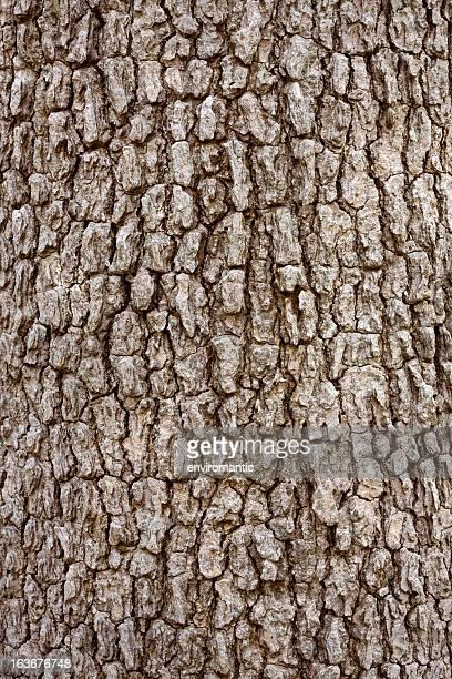 Baumrinde Hintergrund, Baum im Regen Wald.