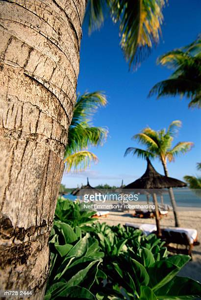 bark of a palm tree and tropical beach, island of mauritius, indian ocean, africa - travel14 stock pictures, royalty-free photos & images