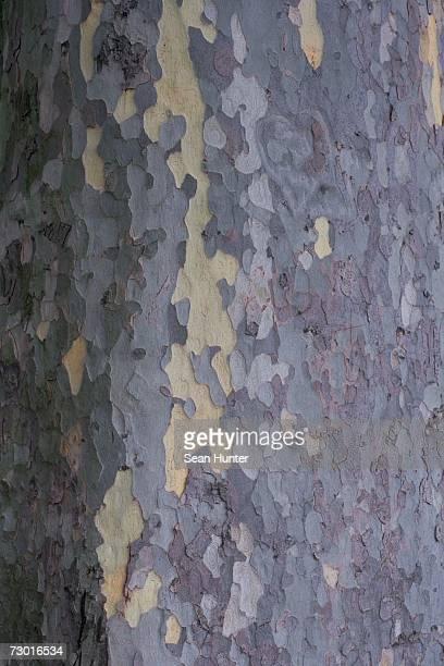 Bark of a tree, close up.