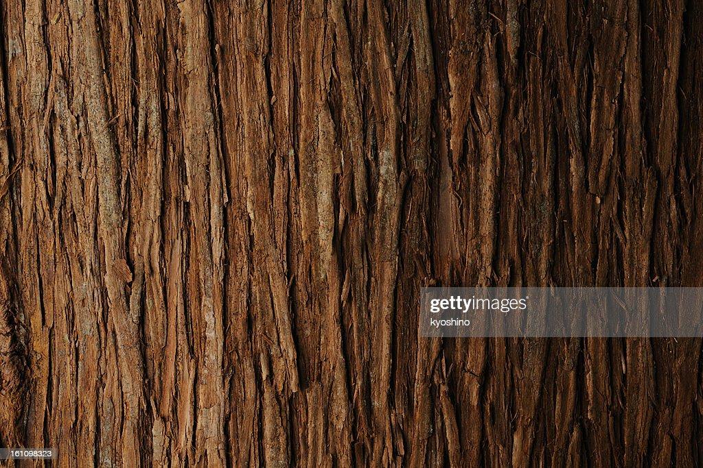 Bark of cedar tree texture background : Stock Photo
