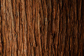 https://www.istockphoto.com/photo/bark-of-cedar-tree-texture-background-gm161098323-17134491