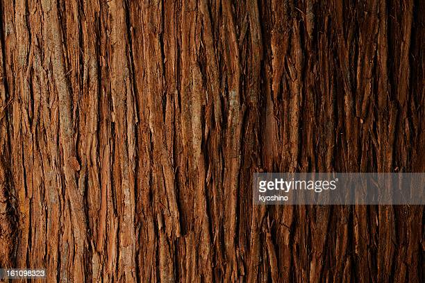 bark of cedar tree texture background - woodland stock pictures, royalty-free photos & images