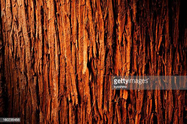 Bark of cedar tree textured background