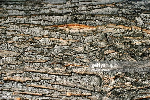 bark - bark stock pictures, royalty-free photos & images