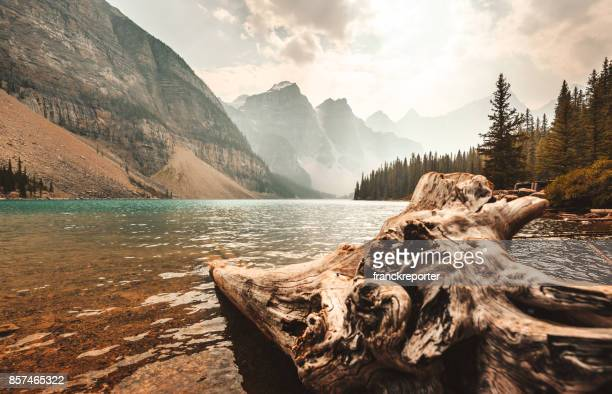 bark wood in the moraine lake at banff national park - moraine lake stock pictures, royalty-free photos & images