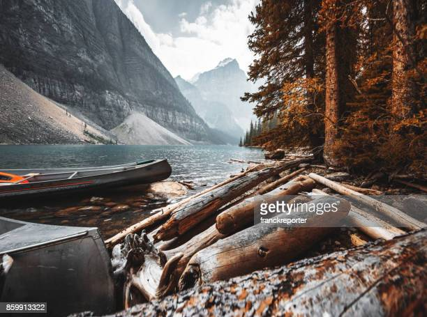 Rinde Holz in der Moraine Lake im Banff National Park