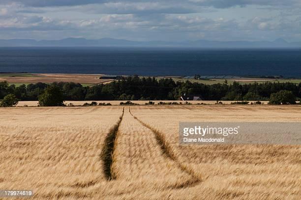 barley blowing in the wind near buckie, scotland - モーレイ湾 ストックフォトと画像