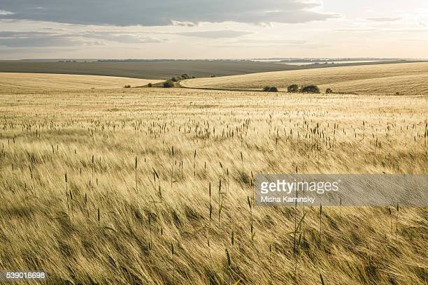 barley fields - ukraine landscape stock pictures, royalty-free photos & images
