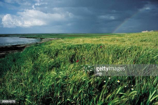 Barley fields View of a rainbow on the fields of barley of Otero de Sariegos Zamora province