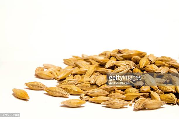 barley grain on a white background - seed stock pictures, royalty-free photos & images